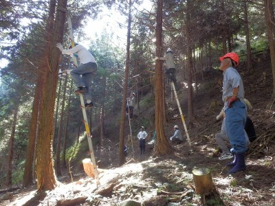 森林組合の方の指導で枝打ち開始