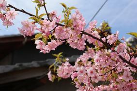 桜が咲き始める、あたたかい日になりました