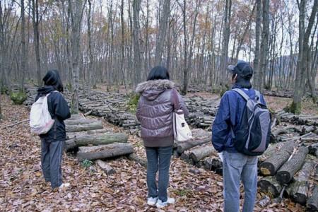 シイタケのホダ木をつくる雑木林を見学
