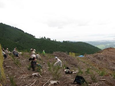 山頂付近の植林地お昼ご飯