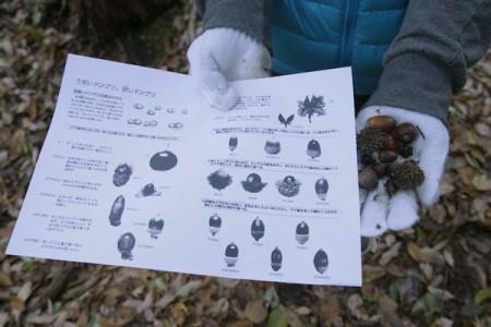 22種類あるというドングリの種類を確認