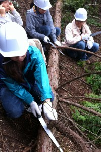間伐材が利用できるように枝をパイプソーで落とす【枝打ち】