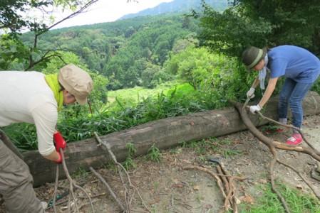 景色のいい八王寺山で木材の製材